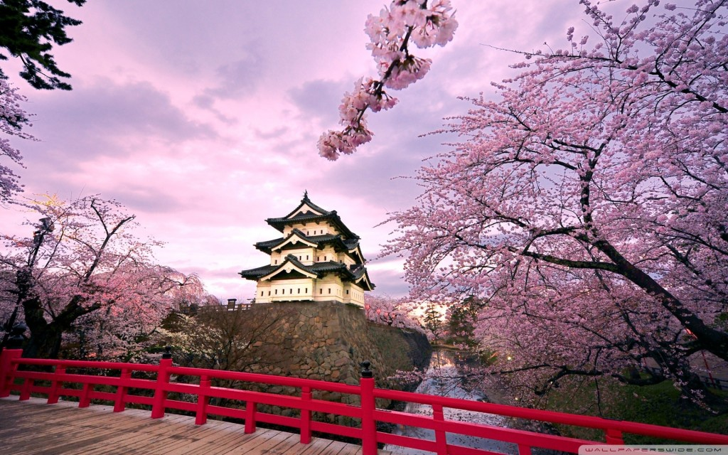japan 2 Cherry-Blossom-Fuji-Hakone-Izu-National-Park
