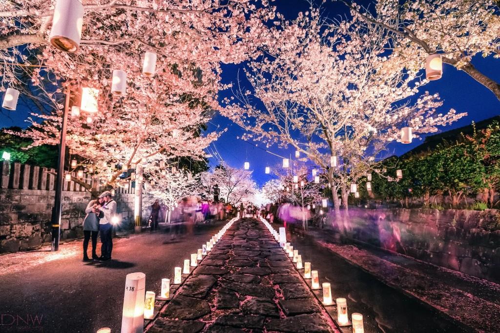 japana cherry-blossom-japan-festival1