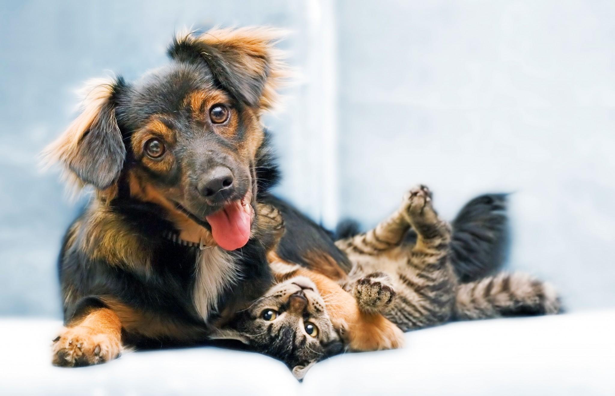 adopta_un_animal_adoptii_caini_pisici