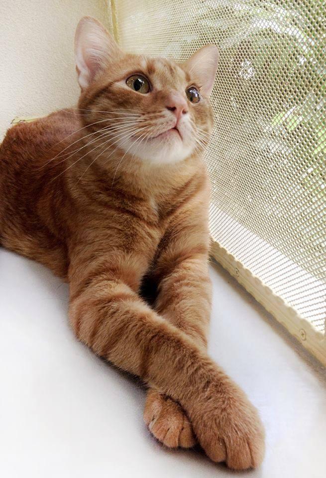 adopta_o_pisica_cat_room_50_de_idei_de_cadouri_de_craciun_fabulous_muses