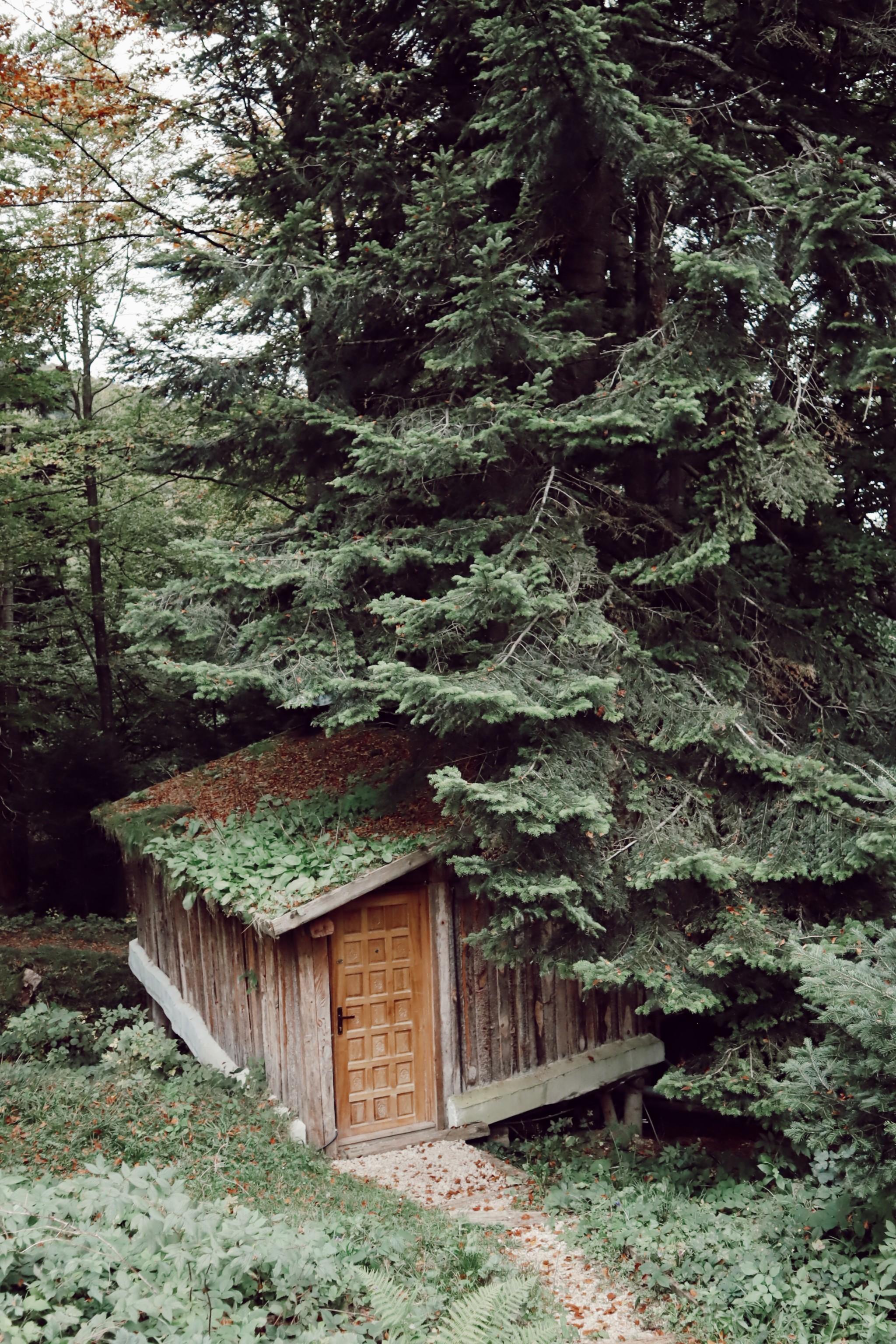 Cea mai tare cazare de la munte de la Casa din Copac 3 de la Predeal Complex Harmonie